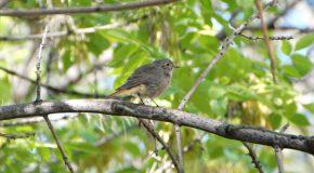 Birding at Bilkent