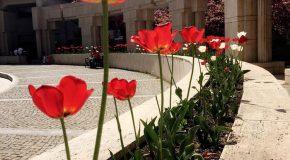 Through Your Eyes: Bilkent News Readers' Photos