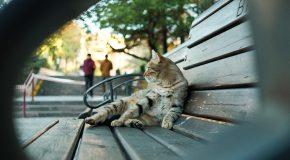 Through Your Eyes: Bilkent in Autumn